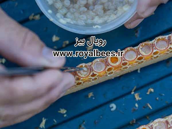 ژل رویال تهران