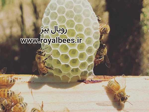 شرکت تولیدی عسل ژل رویال