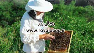 ژل رویال صادراتی_Royal Jelly for export