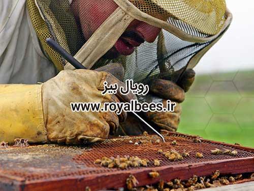 صادرات ژل رویال (Export of Royal Jelly)