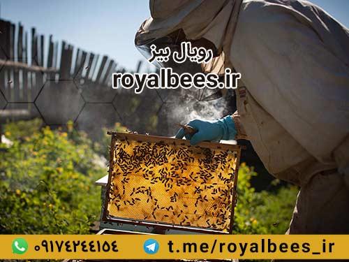 خواص موم زنبور عسل در طب سنتی