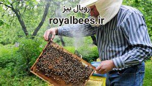 موم ورقه ای عسل
