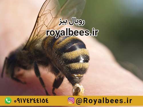 چه پارامترهایی در انتخاب روش مصرف زهر زنبور عسل موثر است؟