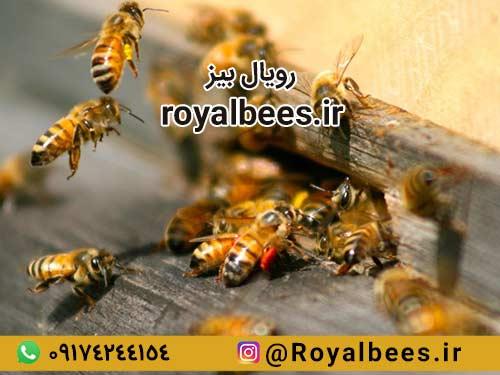 پرکاربردترین روش مصرف زهر زنبور عسل