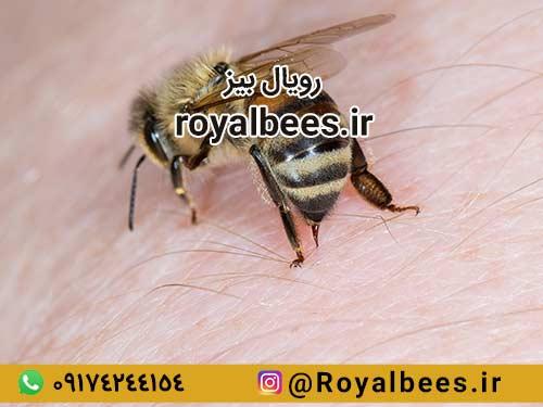 چرا زهر زنبور عسل می تواند به درمان آرتروز کمک کند؟