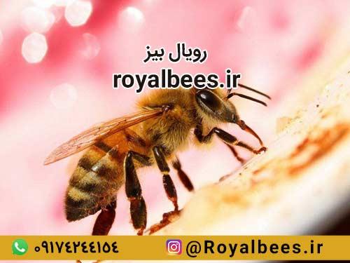 آیا همه می توانند از زهر زنبور برای درمان آرتروز استفاده کنند؟