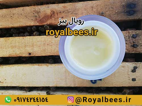 قیمت هرکیلو ژل رویال اصل (خرید ژل رویال بصورت مستقیم از زنبوردار)